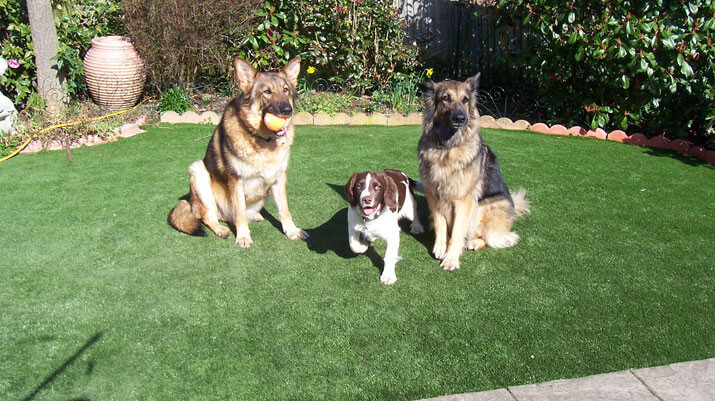 astro turf for dogs best synthetic turf for dogs pet turf always green synthetic grass
