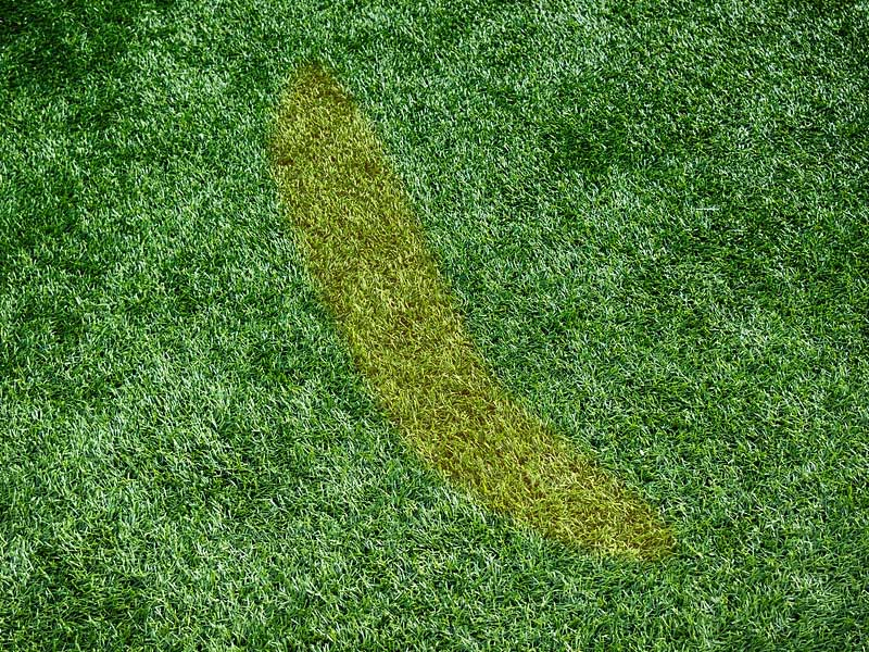 Artificial Grass Stain Removal