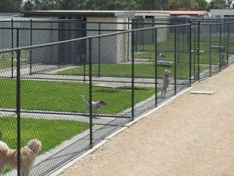 Dog Kennel Pet Turf