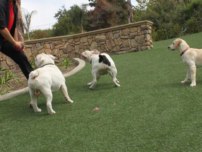 Dog Park Pet Turf