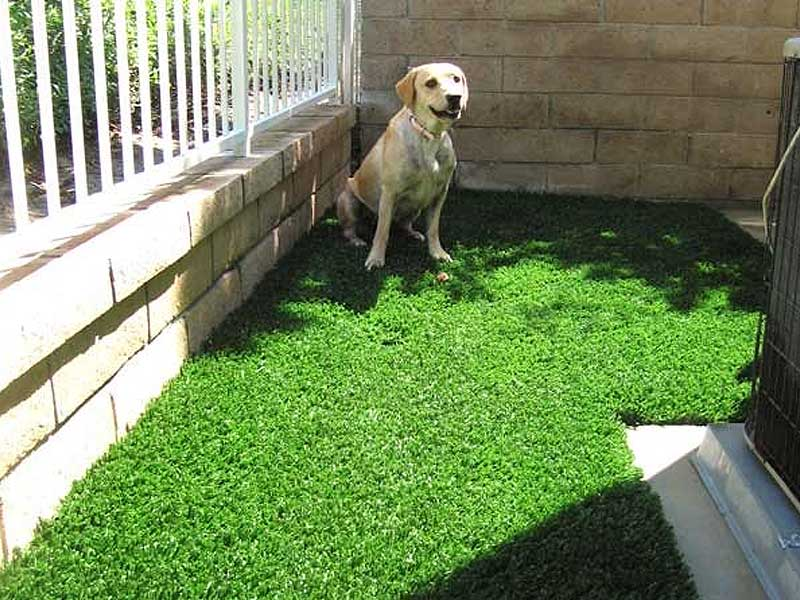 Pet Turf Dog Run