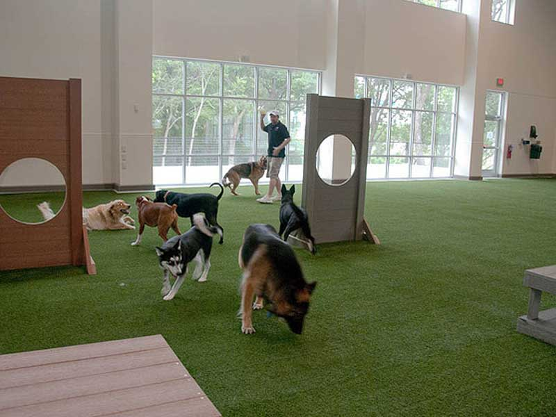 Doggy Daycare Pet Turf