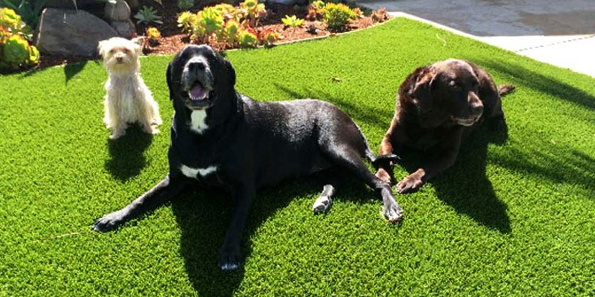 Artificial Grass Best for Dogs